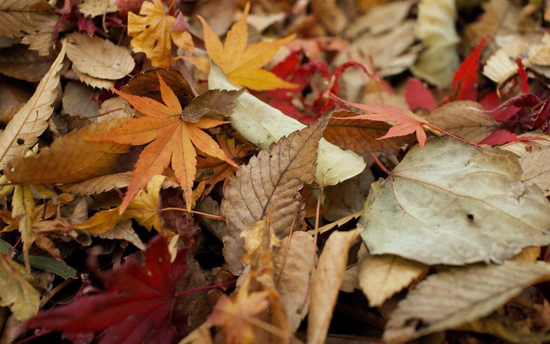Les feuilles de temps se ramassent à la pelle